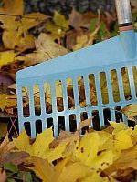 rake-in-leaves-200-300